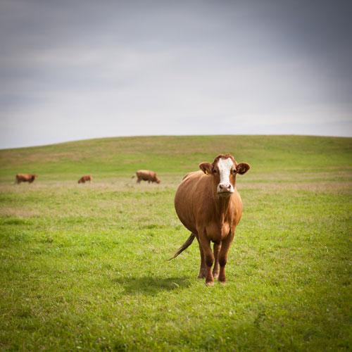 Quanti animali salva un vegano?