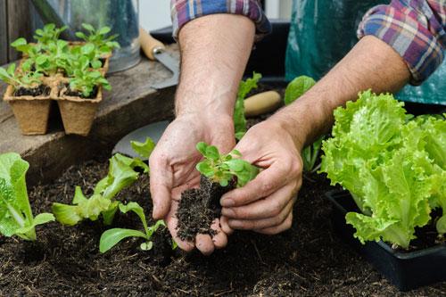 Coltivare il tuo orto sul balcone