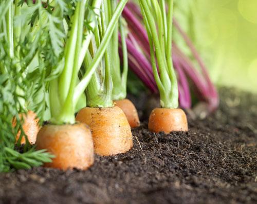 Gli ortaggi più adatti da coltivare in vaso