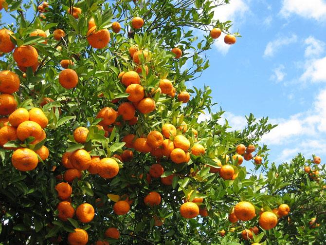 menu crudista dicembre a base di arance