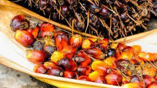 olio di palma e salute come si produce